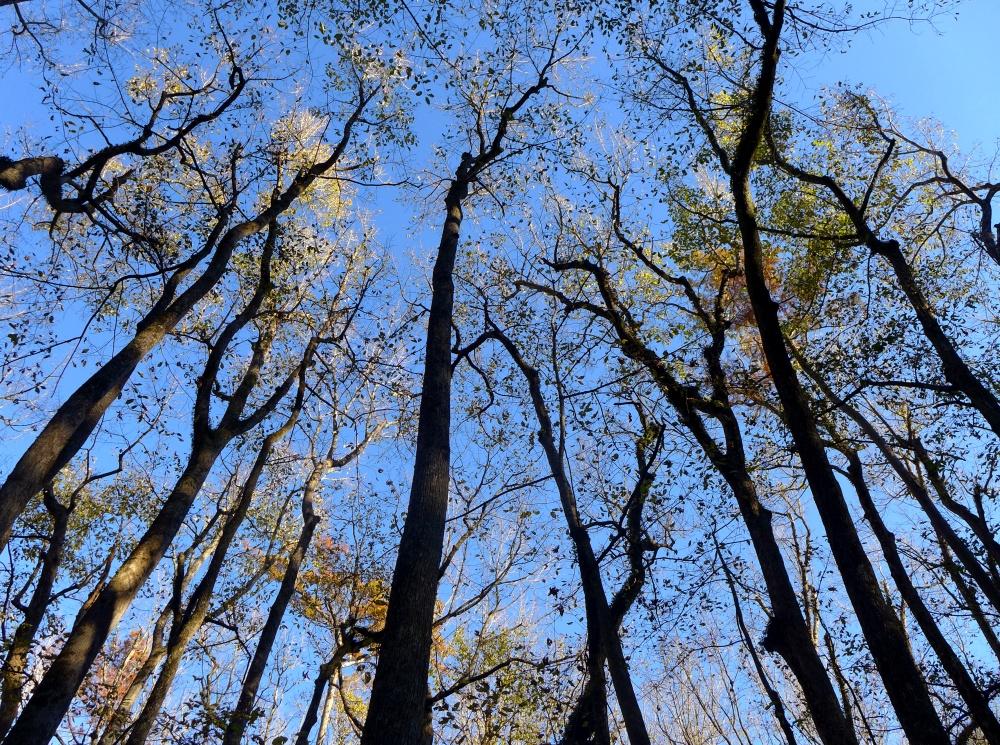 Cypress Autumn
